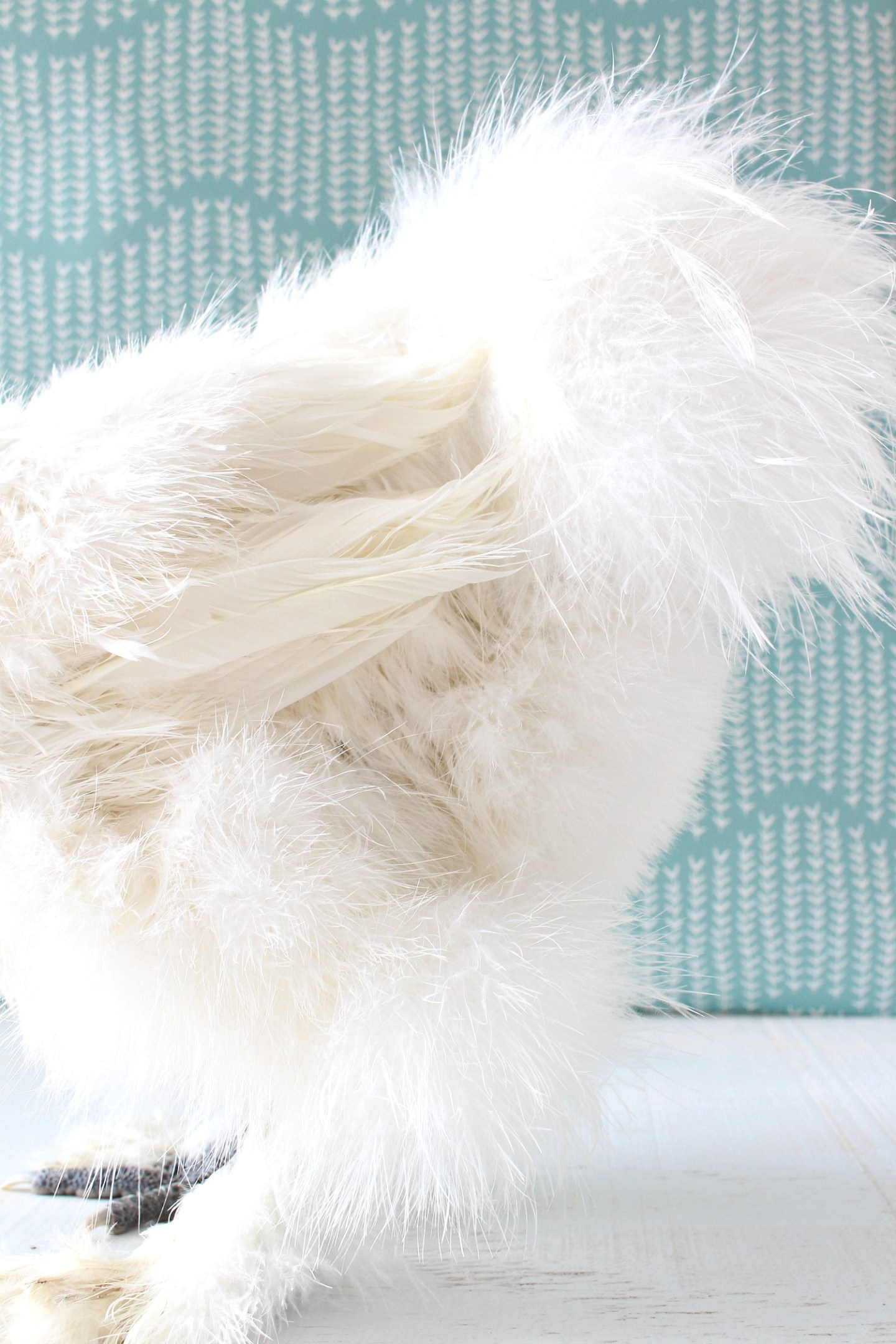 Silkie Chicken Feathers