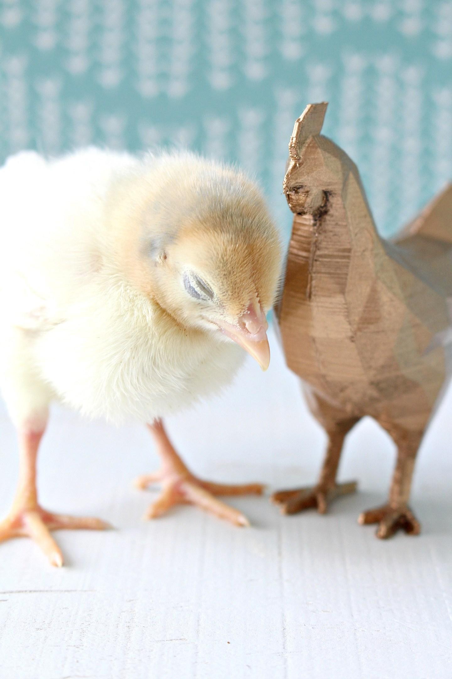 Yellow Baby Chick