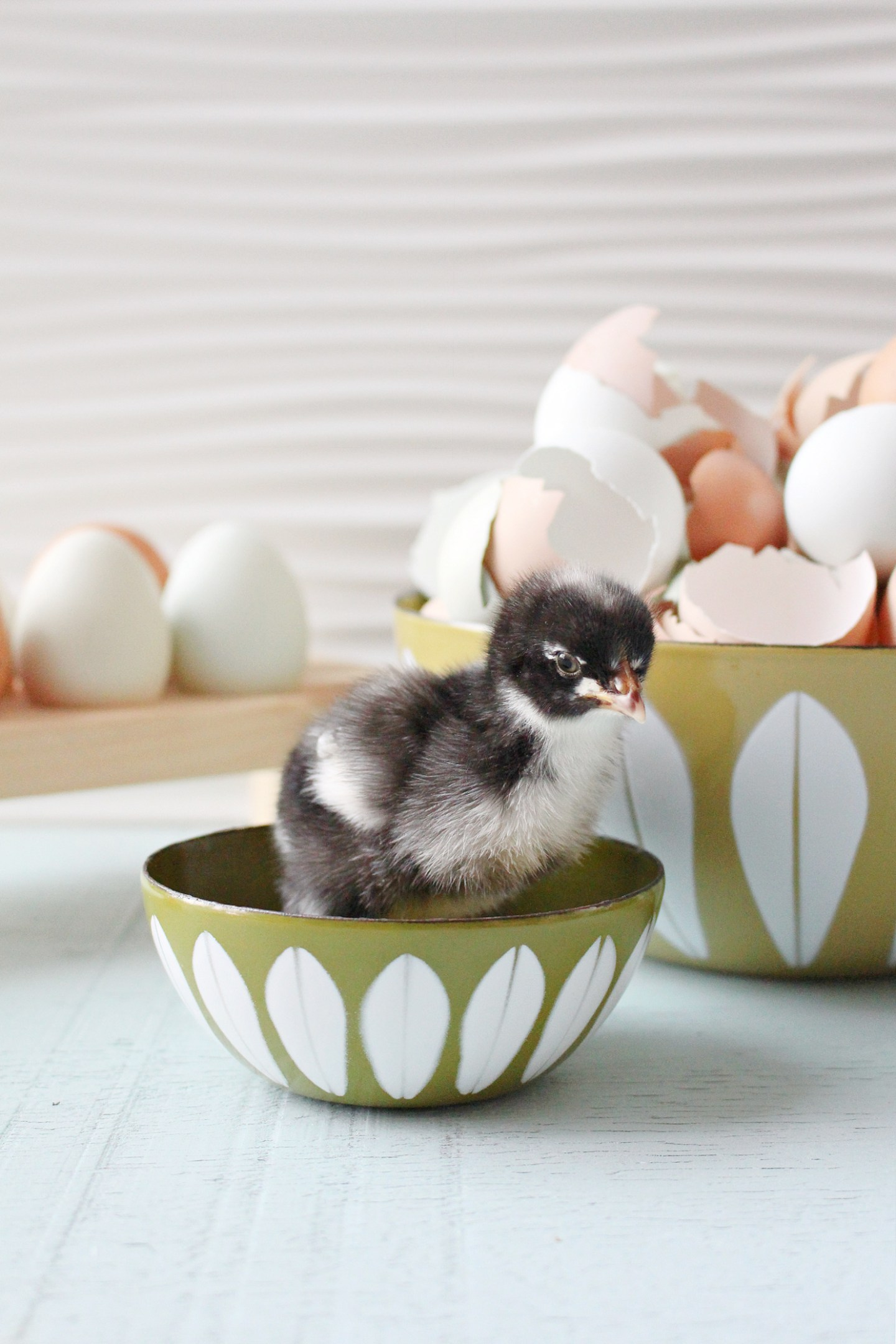 Chick in Cathrineholm Bowl