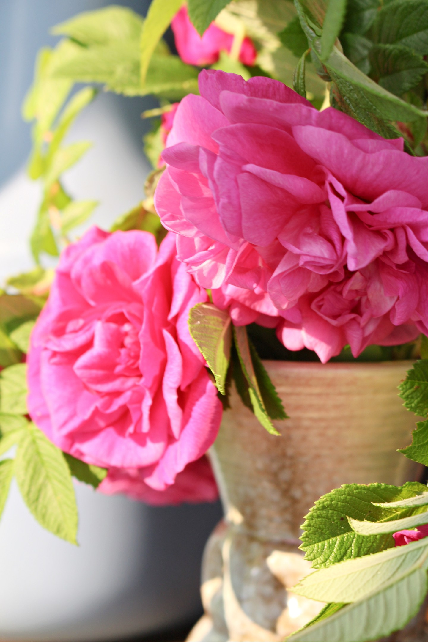 Things to Make With Rose Petals