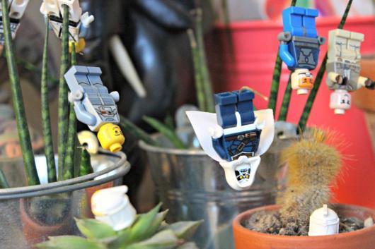 Des Lego et des succulentes