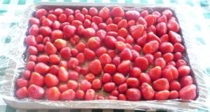 fraises à congeler