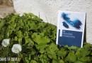 Livre : les cahiers pédagogiques #2 Procédé Cyanotype par Sténopamy