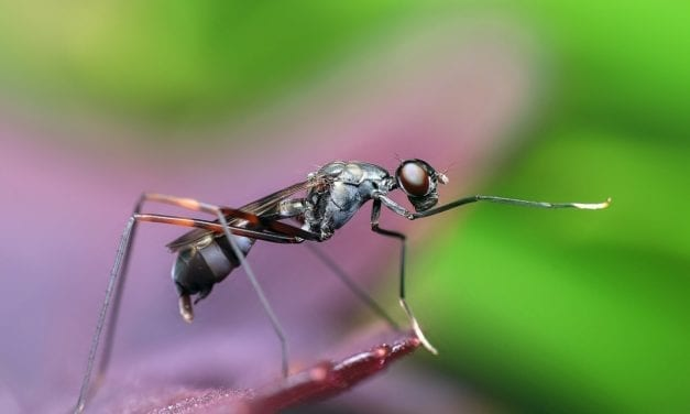 Ants- They Really Are Amazing