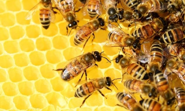 Honey Bees – Life Cycle Video