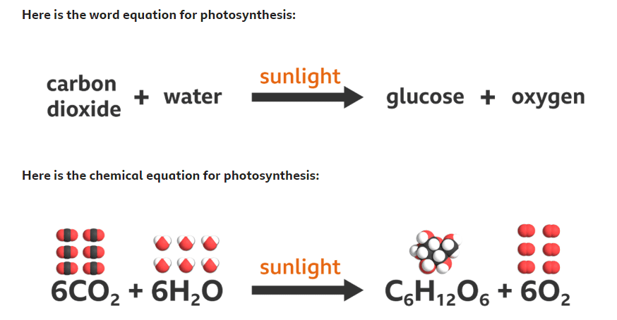 What Is Photosynthesis? – Plant Energy