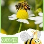 Queenie the Bee