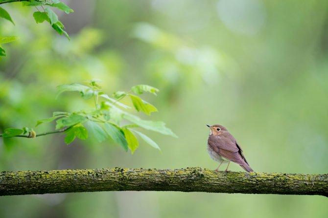 MBSR Kurs Meditation Achtsamkeitstraining Stressbewältigung, Vogel am Zweig im grünen Wald