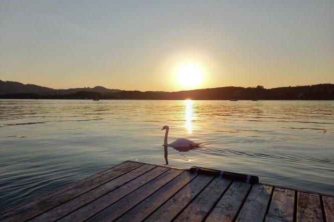 Sonnenuntergang am See mit Schwan, Yin und Yang