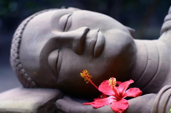 https://i0.wp.com/www.daophatngaynay.com/vn/files/images/2010/quy2/Hibiscus_Buddha_793864424.jpg