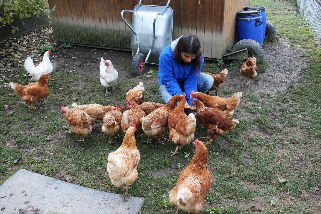 Bild zum Interview mit Ann Bachmann vom Lebenshof Tiermensch