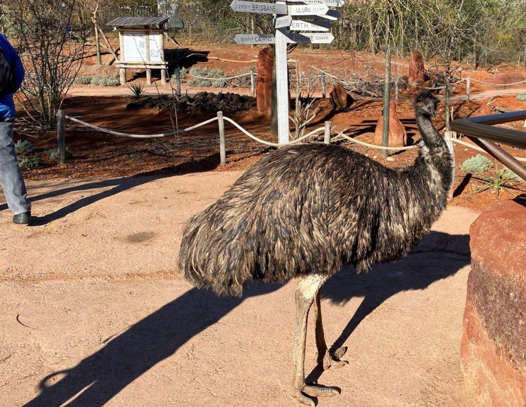 Bild des Emus im Zoo Zürich