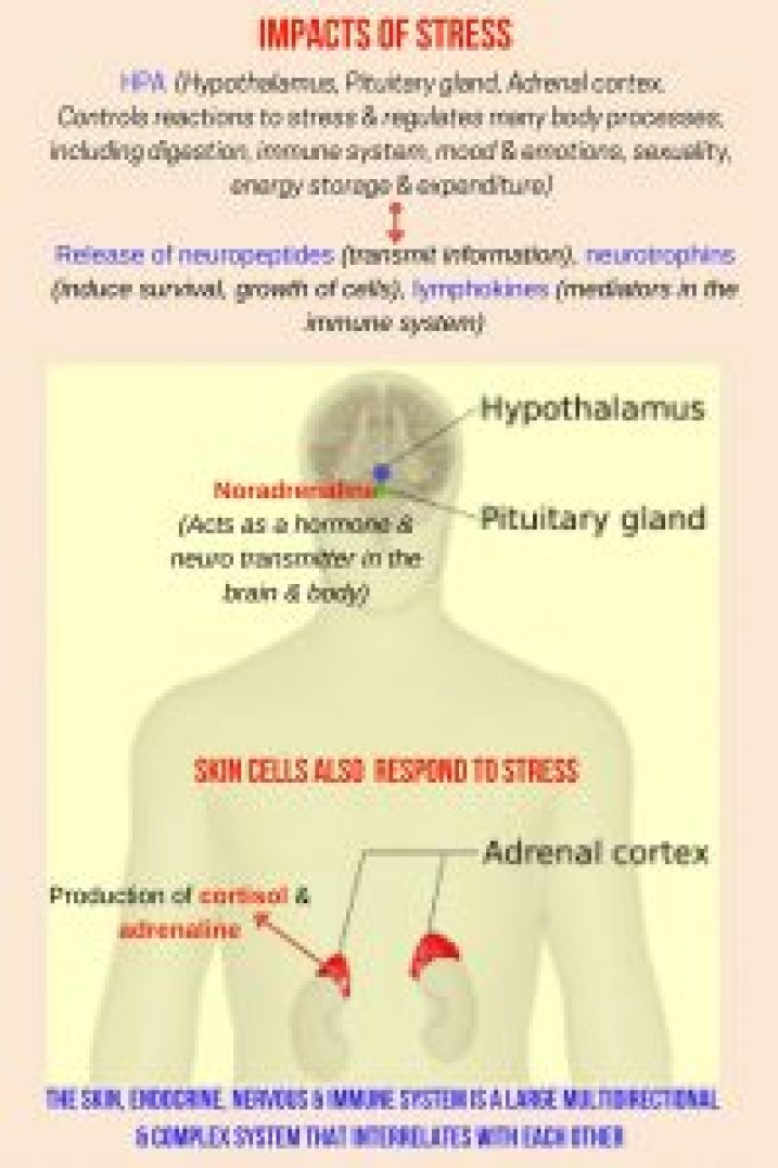 stress impacts hpa by daphnekknow