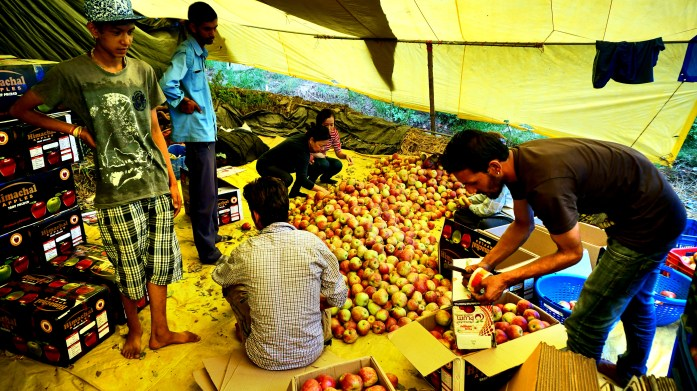 Manali apples