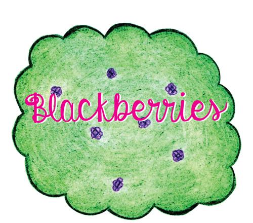 Blackberries2-500