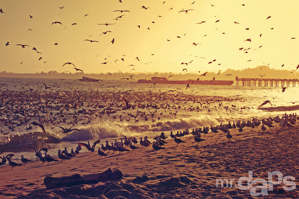 0491_Sunset_Birds_Seacliff_June_22_2014