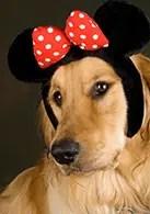pets_Disneyside3