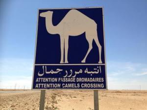 CHENINI et le desert (10)