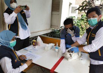 drh. Suhendra, salah seorang dokter dari Dispernakan KBB, saat memberikan vaksin pada kucing peliharaan milik warga (Foto: Heni Suhaeni/dara.co.id)