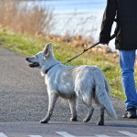 Supplies & Equipments Required Before Starting a Dog Walking Business