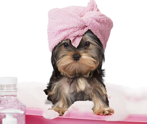 dog grooming appointment app