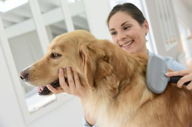 pet grooming on demand app
