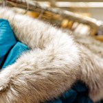 Learn The Proper Way to Care For Fur Apparel In Winters