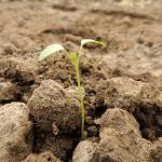 Steps Towards Spiritual Maturity