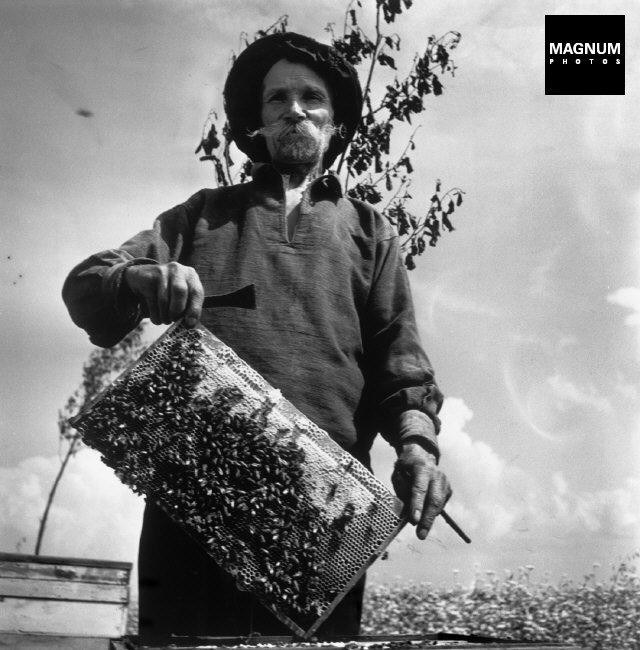 Ukraine. Shevchenko. The beehives of the collective farm.