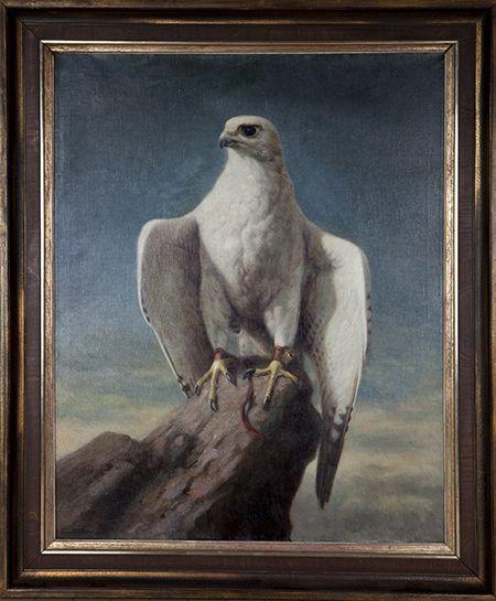 falcoln