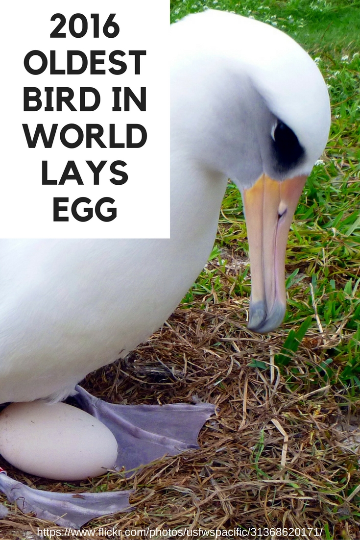 Oldest bird in world lays new egg at age 66. Read her story. | DarcyPattison.com