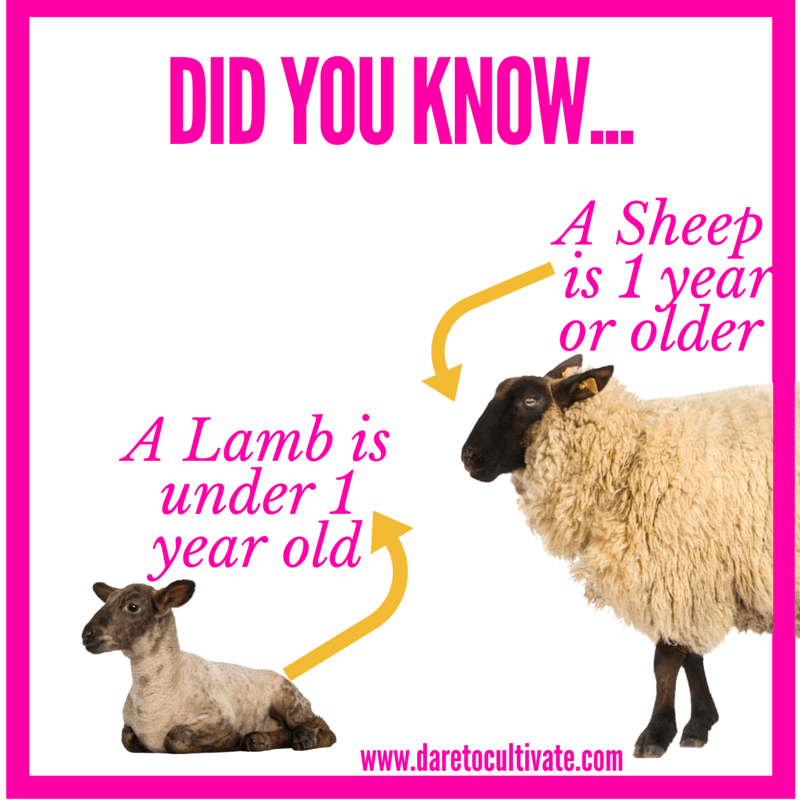 A Lamb is under 1 yr old.