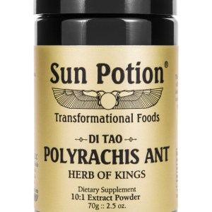 Sun Potion Polyrachis Ant Front View