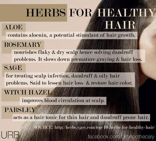 herbs for healthy hair