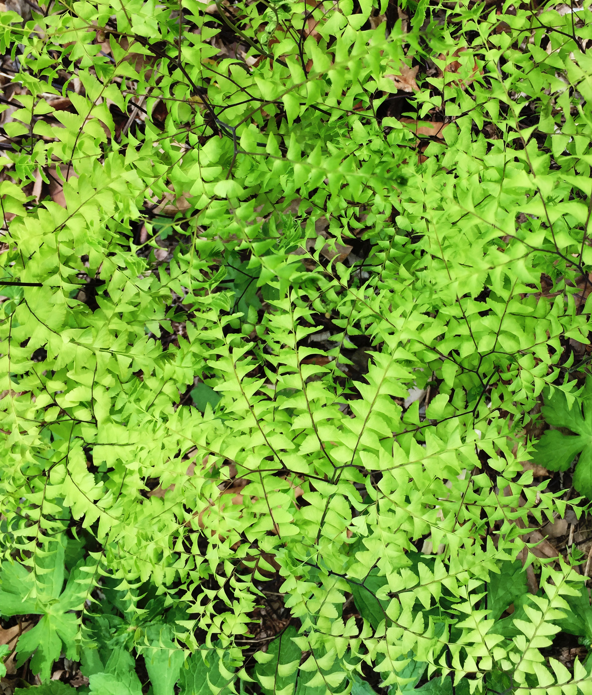 Asheville Botanical Garden / Darker than Green