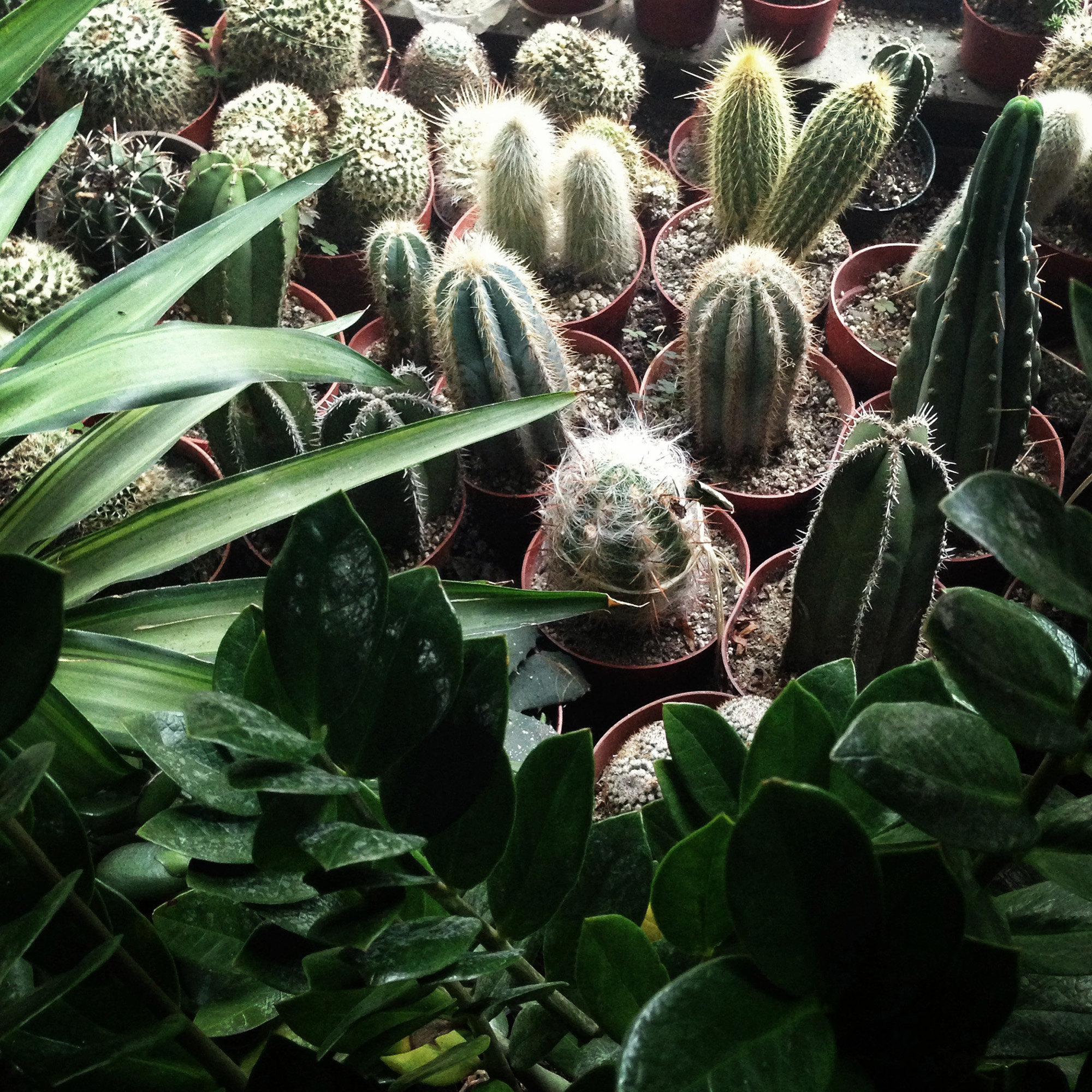 Baby cacti / Darker than Green