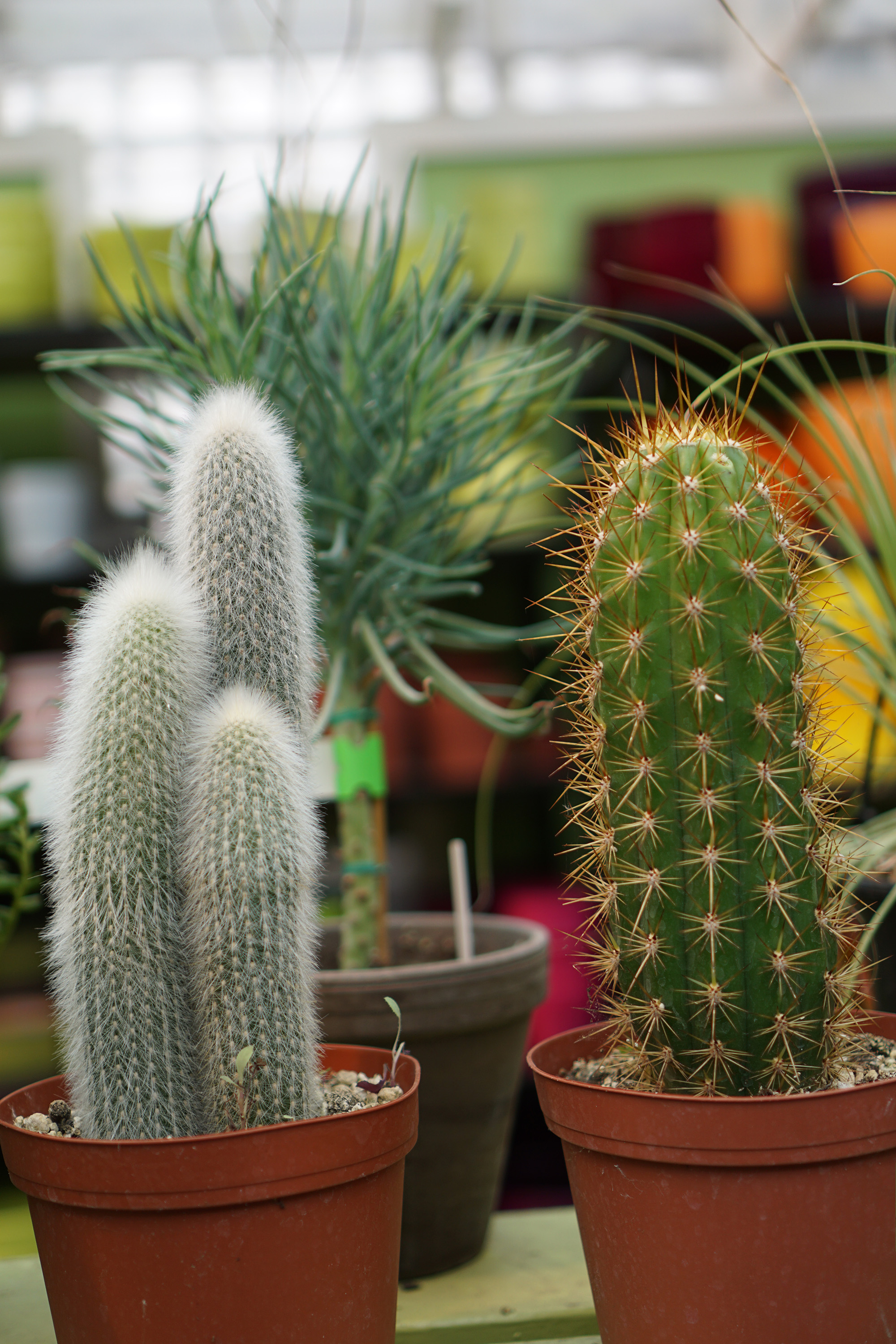 Cacti in Gethsemane Garden Center in Chicago / Darker than Green