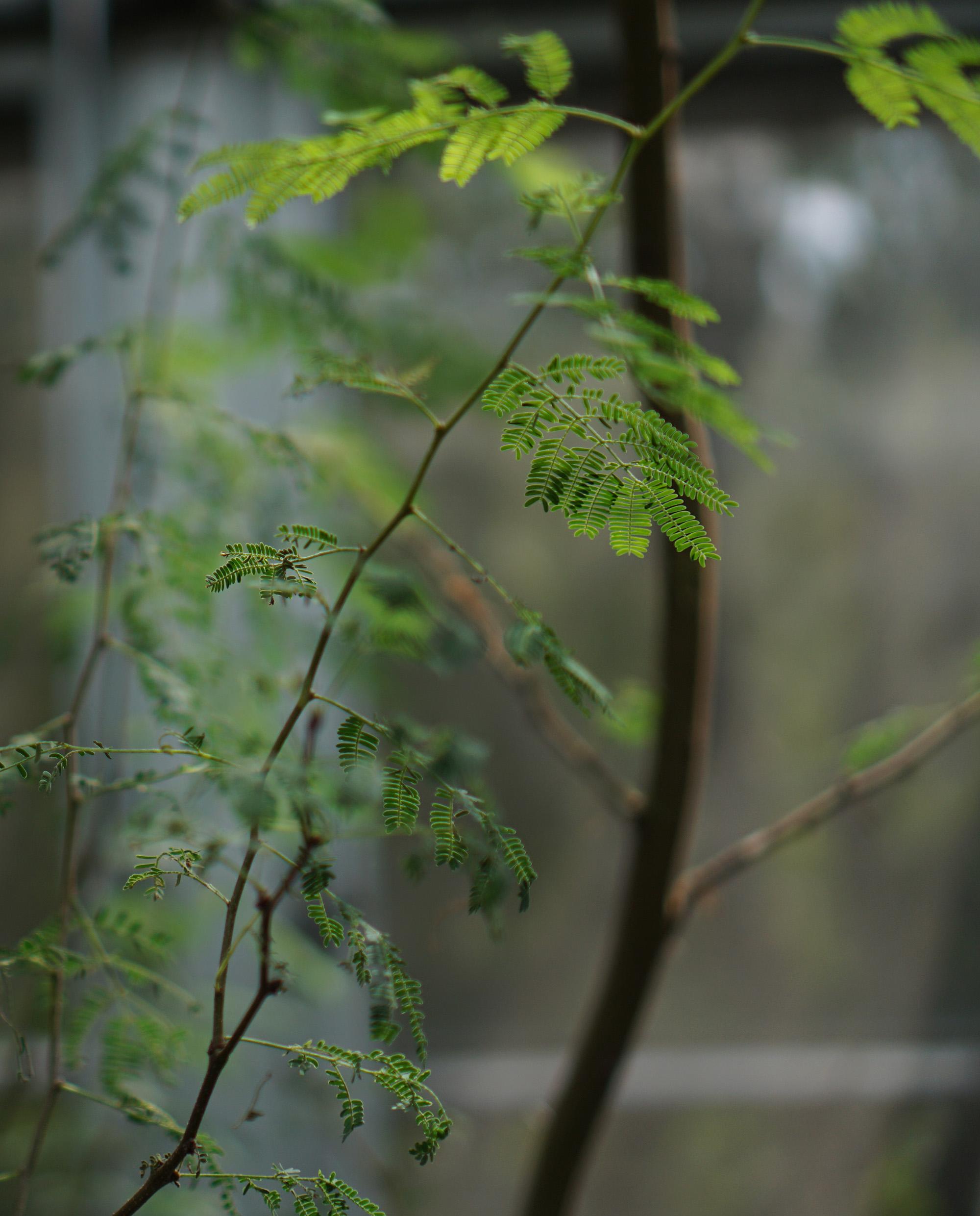 In the desert house, Chicago Botanic Garden / Darker than Green