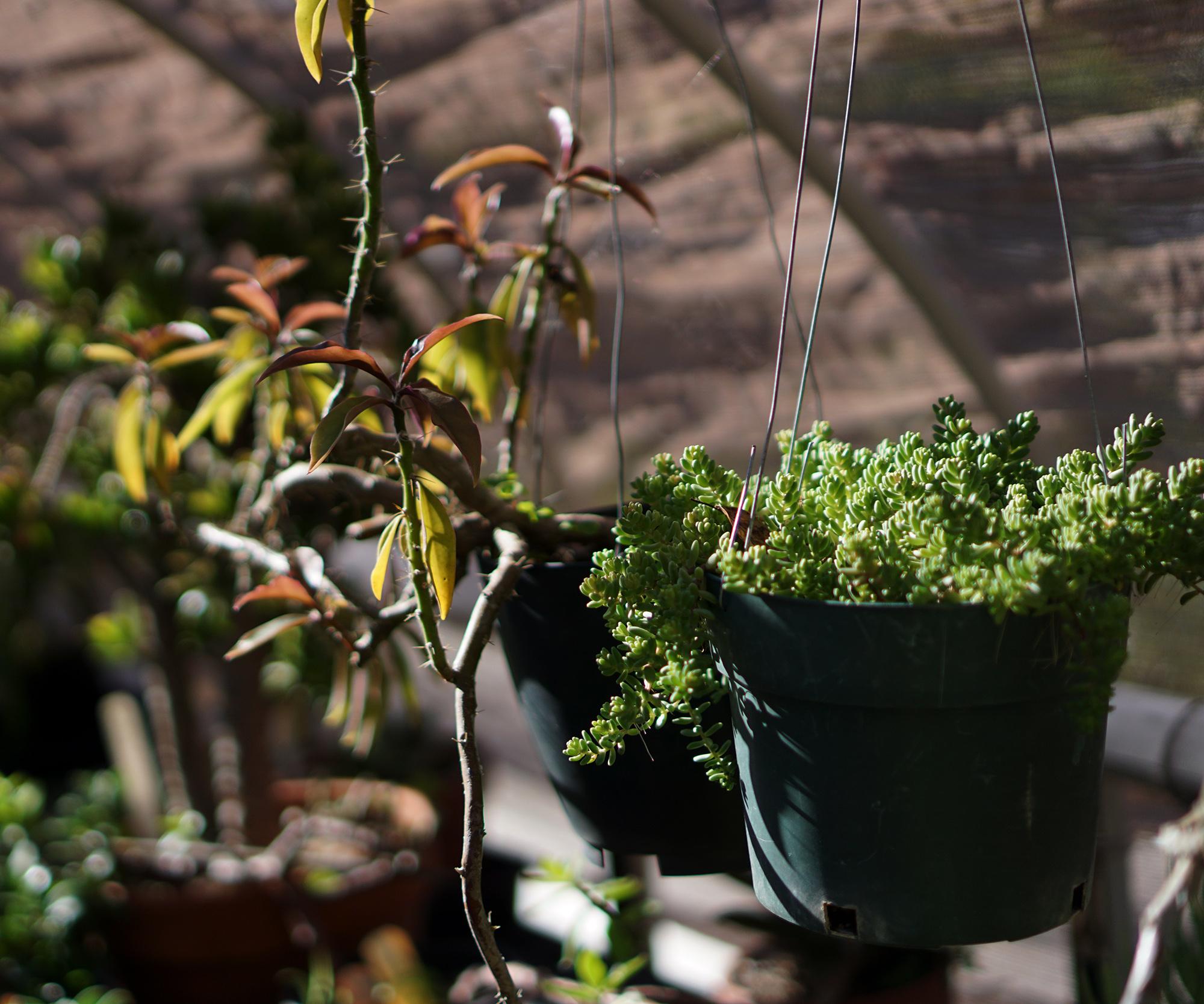 Succulents in a hoop house, San Francisco Botanical Garden / Darker than Green