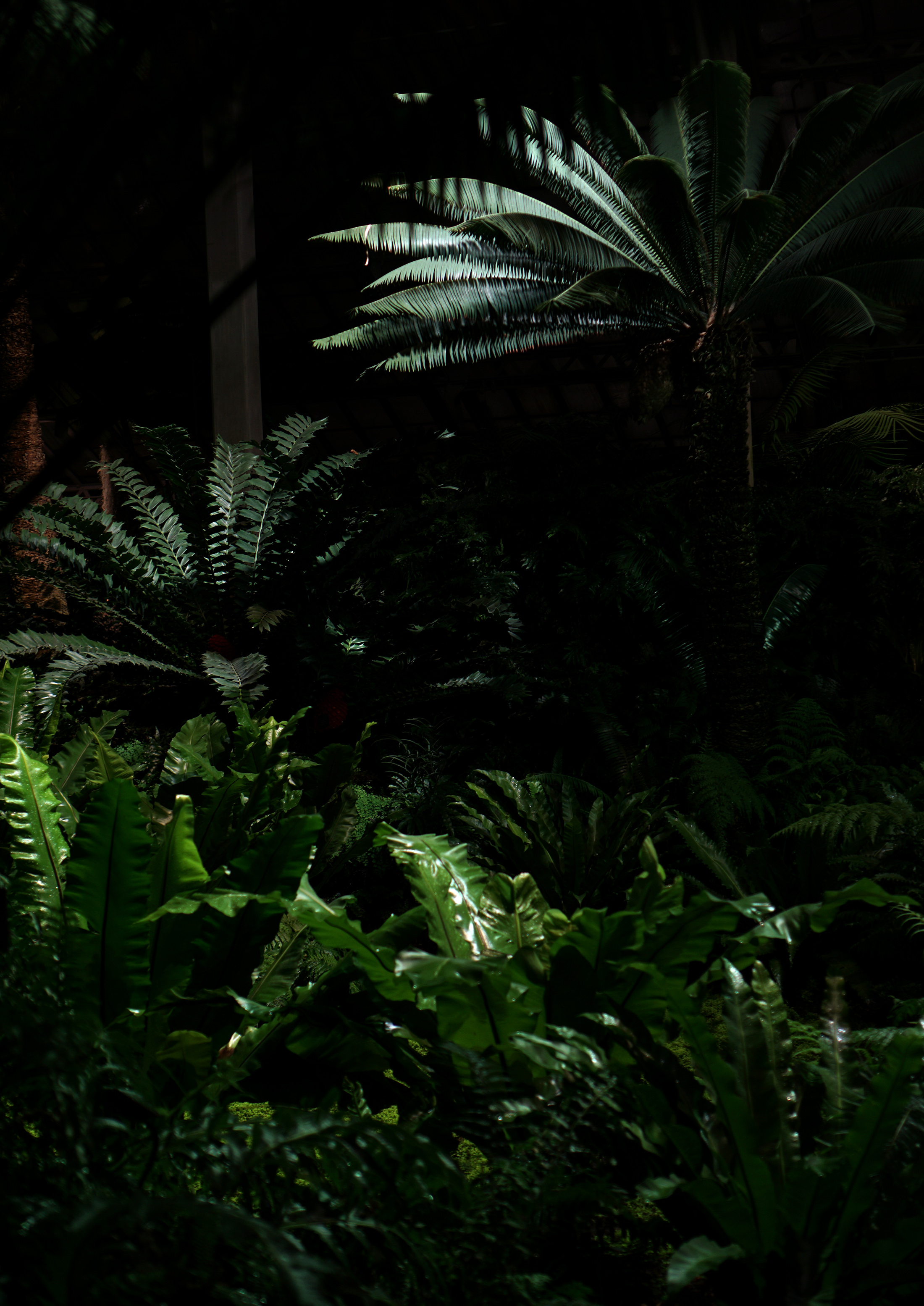 Uplit ferns in the Garfield Park Conservatory at night, Chicago / Darker than Green