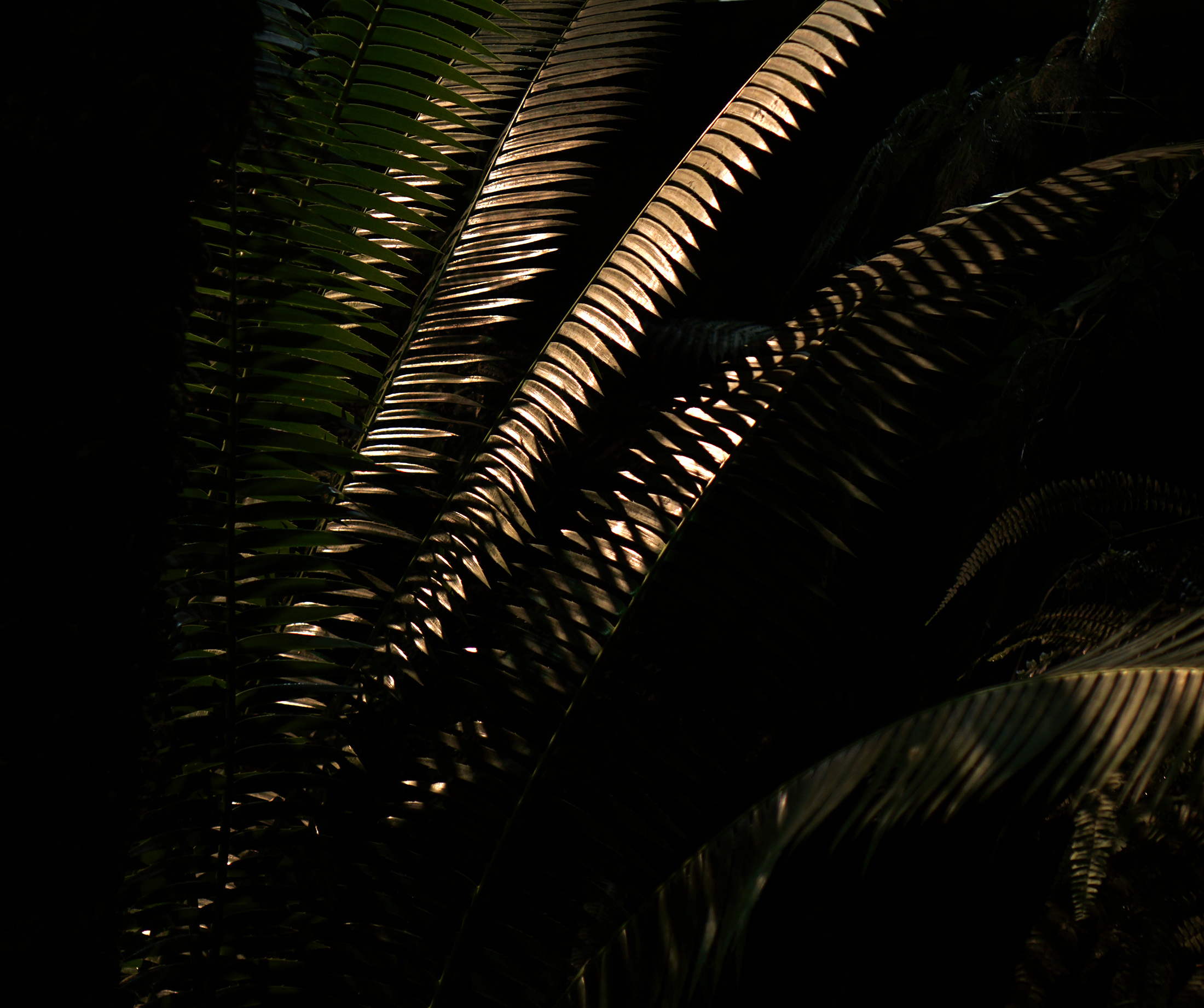Fern fronds in the Garfield Park Conservatory at night, Chicago / Darker than Green