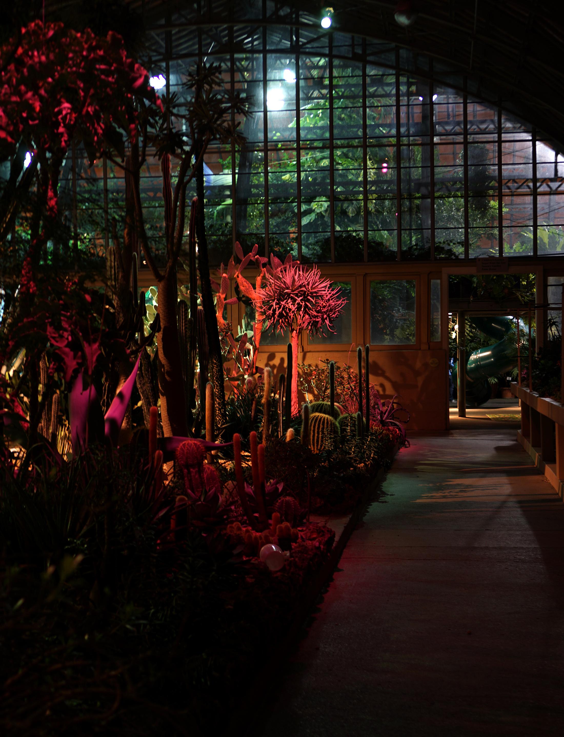 The desert room, Garfield Park Conservatory at night, Chicago / Darker than Green