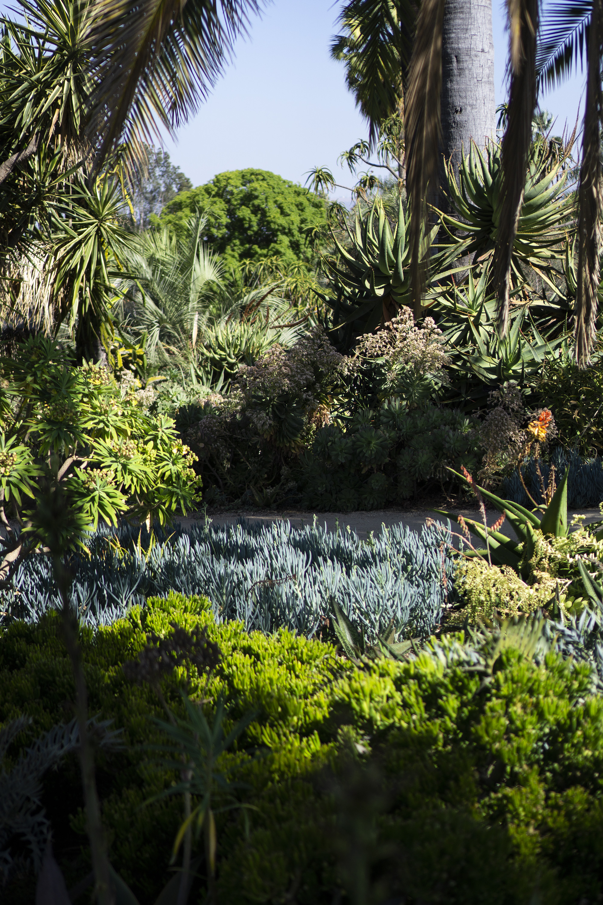 Garden plantings at the Huntington Library, San Marino CA / Darker than Green