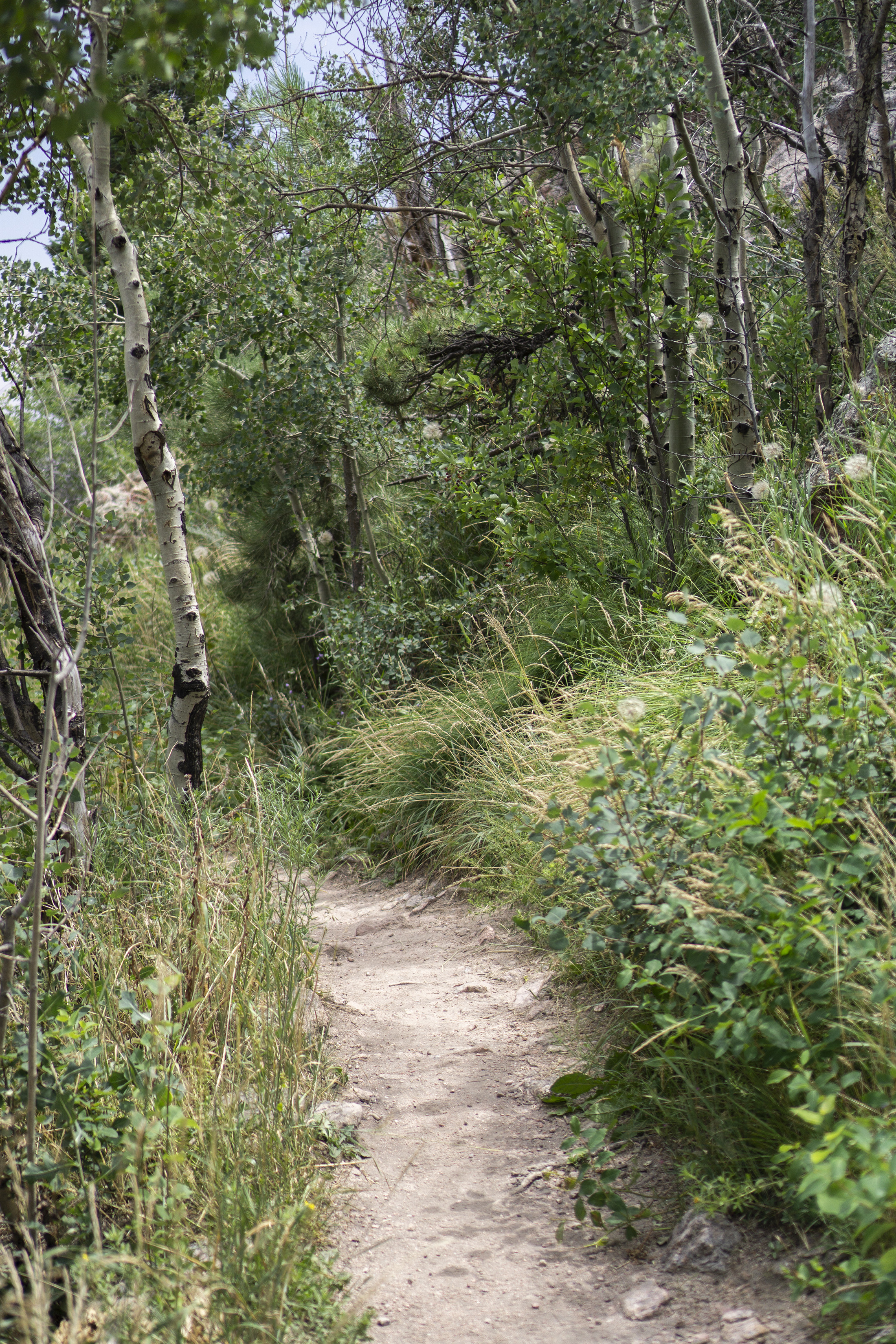 Aspen patch along Horsetooth Rock trail, Colorado / Darker than Green