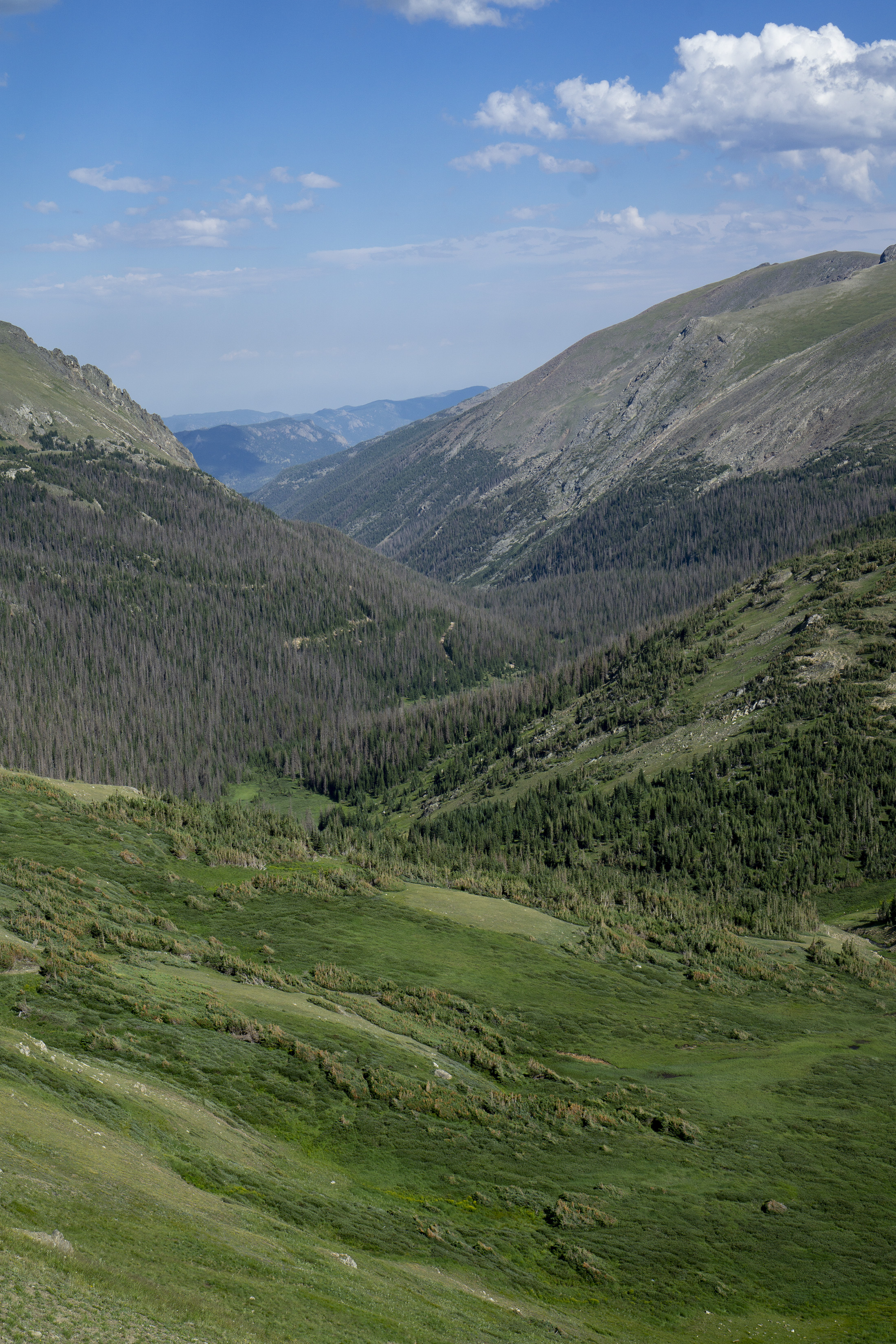 Bright green valley, Rocky Mountain National Park / Darker than Green