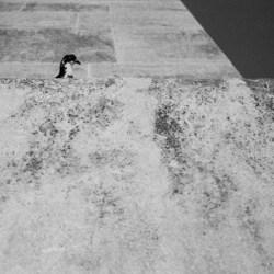 Agfa APX 400, Darkroom Malta, Valletta, 35mm Film, Black and White