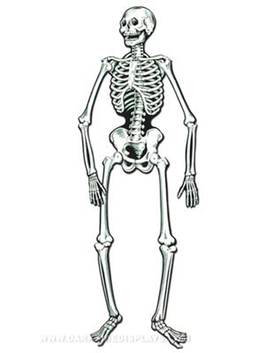 Life-size Jointed Skeleton Cut-Out Decoration