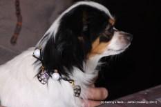 Collier fantaisie pour petit chien 15 €