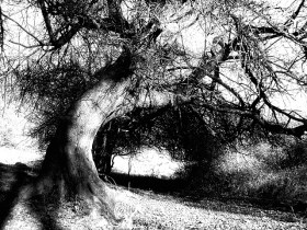 An old bent tree