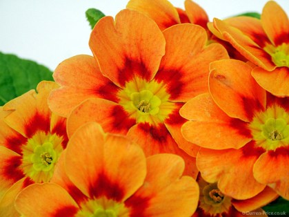 Bright orange flowers
